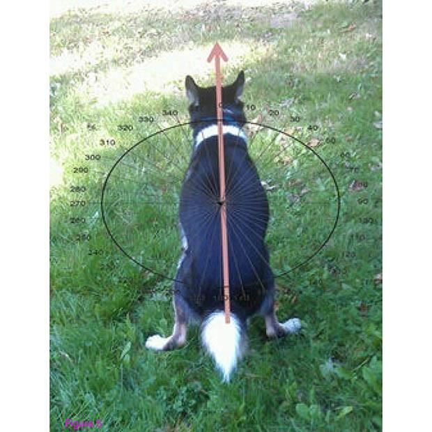 Dog Poop Magnetism 03
