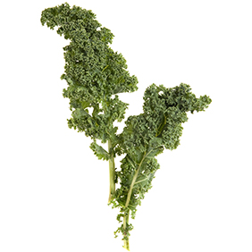 Sept. 17, 2013 - Huntington Beach, California, U.S. - Curly Edge Kale...Additional Information:  Kale.1002 -  9/17/13 - Kale is the rage, whether enjoyed at a restaurant or cooked up at home.  Four lucious dishes demonstrate different uses of a variety of Kale. (Credit Image: © Nick Koon/The Orange County Register/ZUMAPRESS.com)