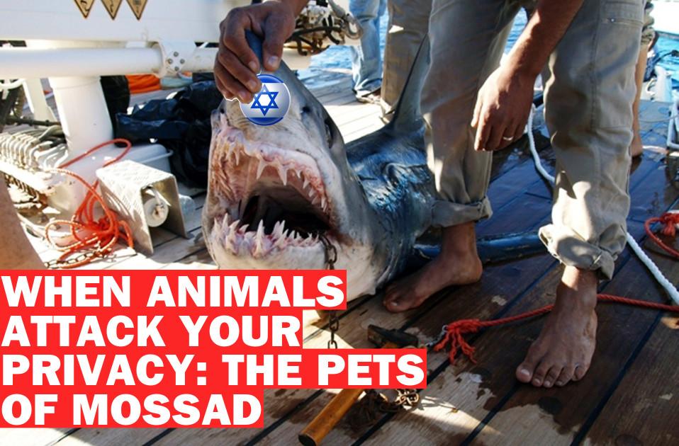 Poster mossad pets9221845212
