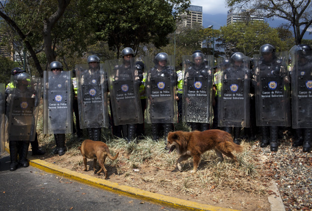 March 12th, 2014. Caracas. Stray dogs wander past the police lines before the clashes. One month after student protests over violence, inflation and food shortages convulsed Venezuela, resulting in the deaths of 3 people on that first day of unrest alone, thousands of students took to the streets in Caracas on Wednesday morning in parallel rallies, one to support the government, the other condemning this month's violence against protesters and continuing to call for change. At least 3,0000 students attempted to march to the offices of the government Public Defender's offices in Caracas to protest allegations of torture of detained protesters. National police blocked the students exit from the Central University of Venezuela, and after negotiations failed, the students attempted to push through the police lines, and were met with water canons, tear gas, and bird shot.