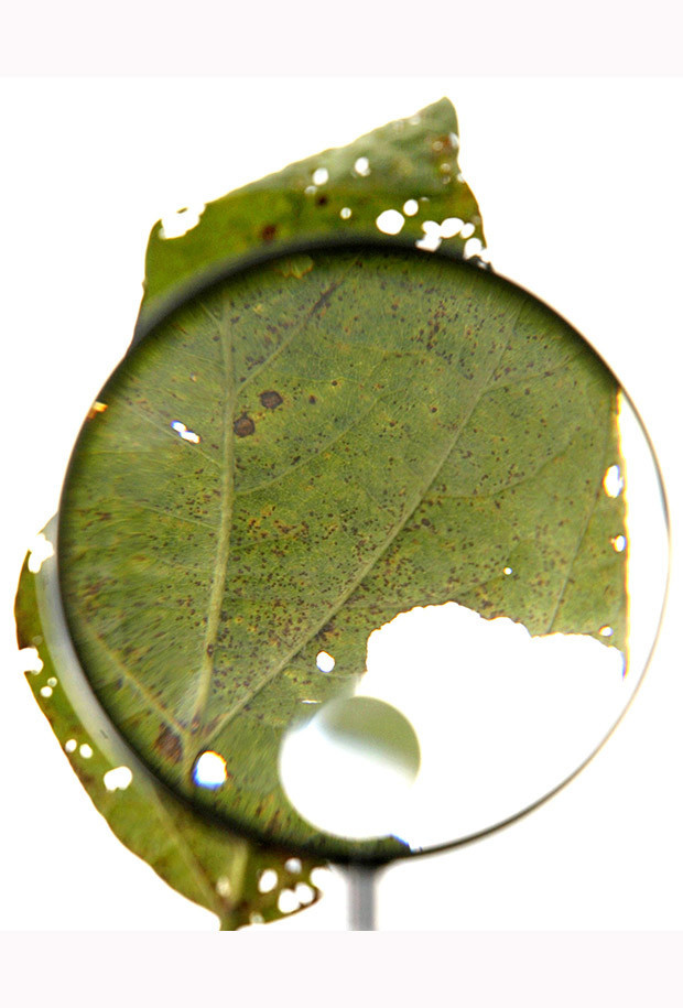 A soybean leaf contaminated with Asian soy rust is pictured through a magnifying lupe, in a experimental plantation in Sorriso, in the central Brazilian state of Mato Grosso.