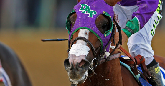 California Chrome Is Nasal-Strip-Approved for the Belmont Stakes