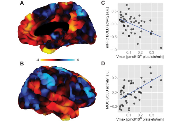 Functional brain correlates of platelet 5-HT uptake velocity.(A–B) Figures display right-hemispheric surface mappings of a whole-brain correlation analysis between platelet Vmax and BOLD activity (n=48). Significant brain areas showed positive and negative correlations. Negatively correlated clusters comprised areas of the DMN such as regions within the mPFC/ACC as well as the PCC, MTG, and ITG. Positive correlations were found in the fronto-parietal control system encompassing the CEN and SN with a significant cluster located in the right MOC and PMC. The corresponding left-hemispheric mapping is shown in Figure S2. Colorbar represents t-values. (C) Scatter plot shows the negative relationship between platelet Vmax and BOLD activity averaged across the mPFC cluster (peak at [−7.7, 44.1, 27.5]). (D) Scatter plot shows the positive relationship between platelet Vmax and BOLD activity averaged across the MOC cluster (peak at [20.8, −21.6, 69.1]). All analyses are controlled for age, gender and 5-HTTLPR. Serotonin, 5-HT; maximal 5-HT uptake velocity, Vmax; default mode network, DMN; medial prefrontal cortex, mPFC; anterior cingulate cortex, ACC; posterior cingulate cortex, PCC; middle temporal gyrus, MTG; inferior temporal gyrus, ITG; central executive network, CEN; salience network, SN; motor cortex, MOC; premotor cortex, PMC; blood-oxygen-level dependent, BOLD; a.u., arbitrary units.
