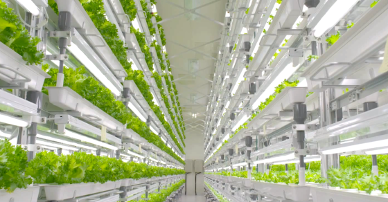 Fujitsu Starts Growing Salad Greens Instead of Silicon Chips
