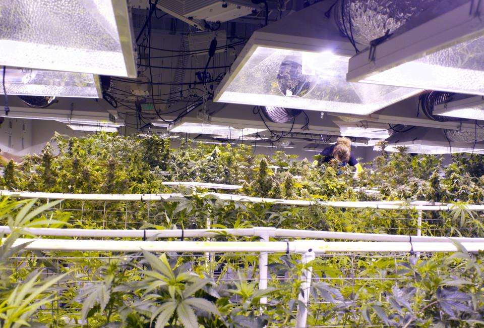 Weed Eco Grower_02
