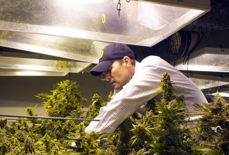 Weed Eco Grower_03