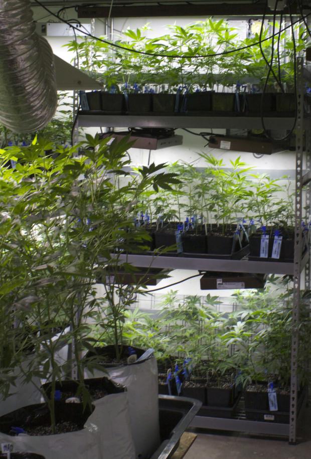 Weed Eco Grower_04