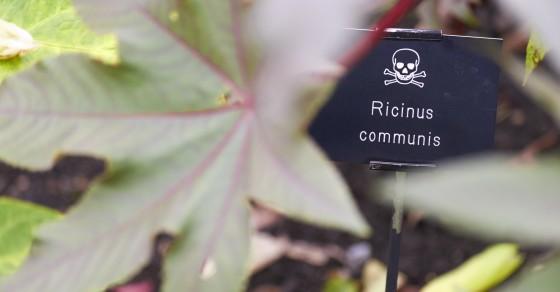 A Stroll Through This English Garden Could Literally Kill You