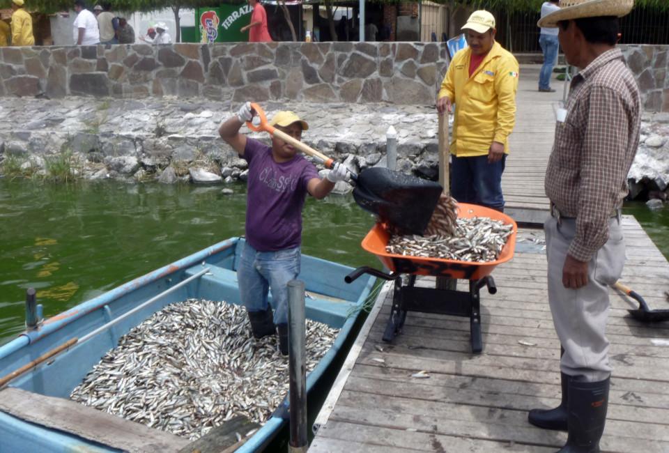 Mexico Dead Fish_02