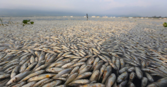 Millions of Dead Fish Mysteriously Surface in Lake in Mexico