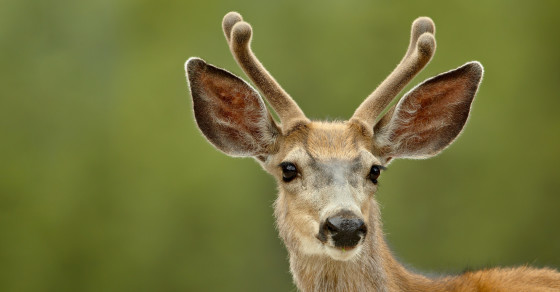 Man Thinks Dead Deer Is Alive, Shoots, Misses, Hits Another Hunter