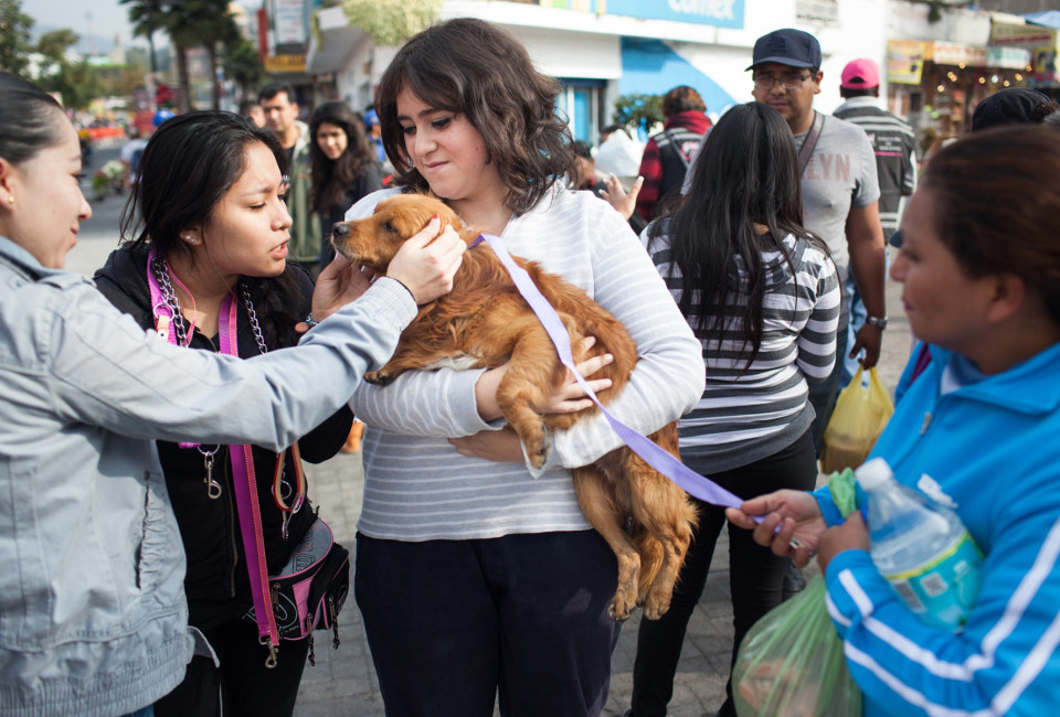 Mariel Hernández of Mundo Patitas shows the first stray dog she picked up Saturday to other volunteers.