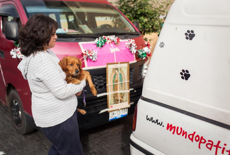 Mexixo Stray Dogs_02