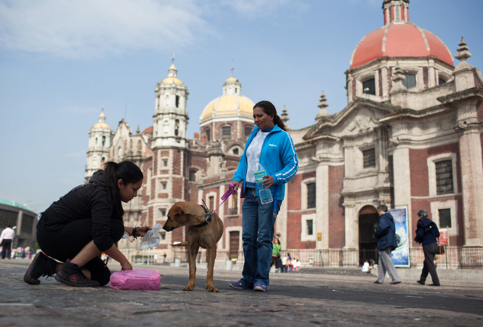 Mundo Patitas volunteers attempt to convince a blond dog to come with them on the square.