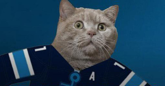 Cat Becomes Russian Celebrity and Mascot After Seafood Heist
