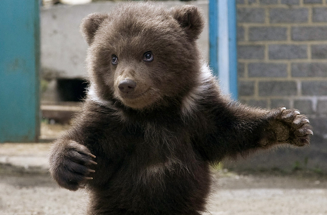 This Tiny Bear Cub Is The World S Cutest Rite Aid Shopper