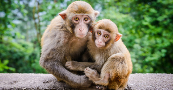 Meet The Most Narcissistic Monkey On The Planet