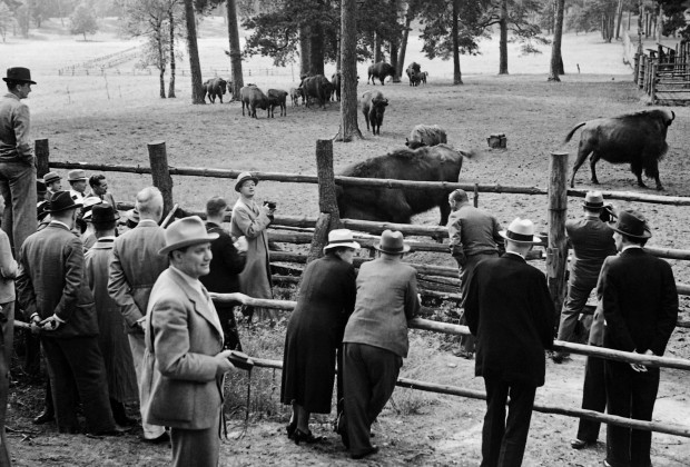 CPJAC1 Guests visit the bison enclosure in the Schorfheide, 1938