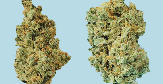 Wait, Smoking Weed Can Actually Protect Your Brain? Woah
