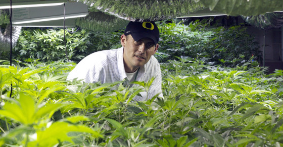 Jobs in the Weedconomy: The Grower