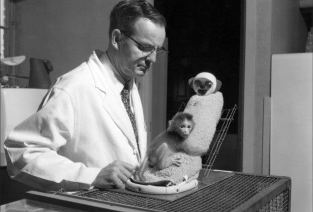 Harry Harlow's research showed that baby monkeys would cling to a fake mother covered in cloth and not one made of wire, showing their need for soft touch to develop attachment.