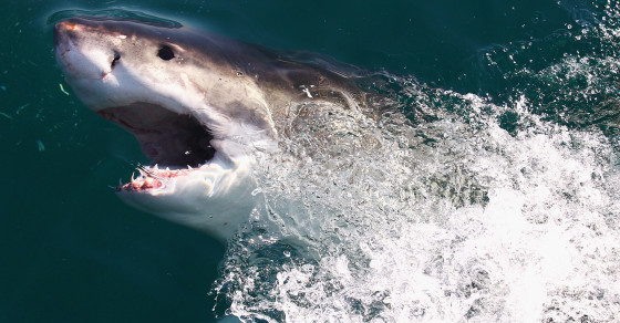 The Truth About Shark Attacks