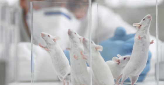 Which States Do The Most Animal Testing?