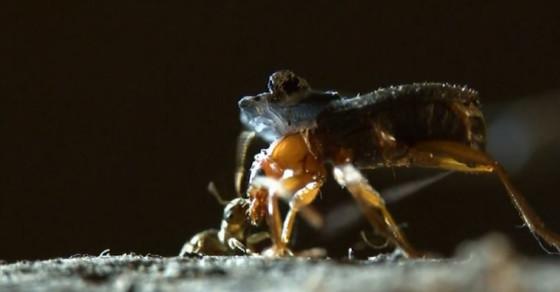 These Beetles Shoot Searing Toxins At Their Enemies