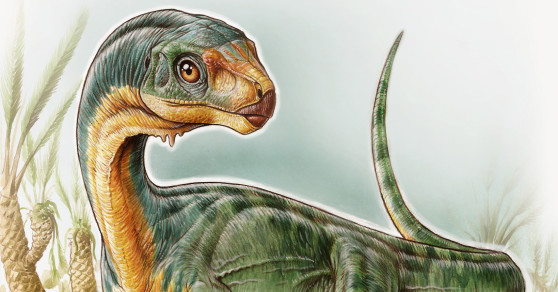 Chilesaurus: New Dinosaur Species Discovered In Chile
