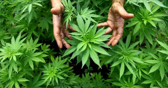 The Strange Case Of Cannabis Activist Shona Banda