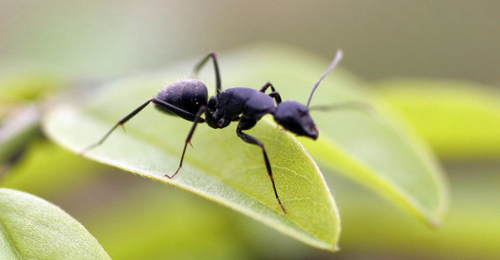 Why NASA Put Ants In Space