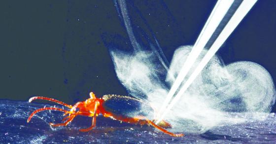 Bombardier Beetles Shoot Searing Toxins At Their Enemies