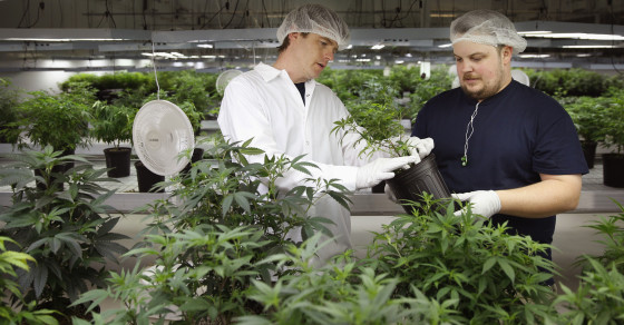 The Science Is Shaky When It Comes To Medical Marijuana