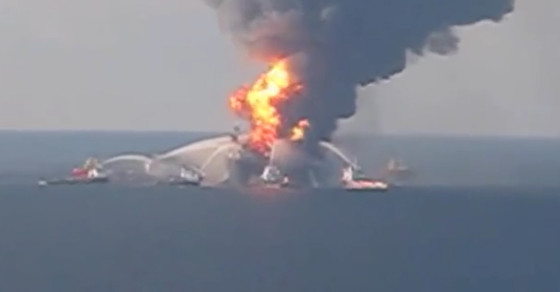 Deepwater Horizon Oil Spill Killed Dolphins