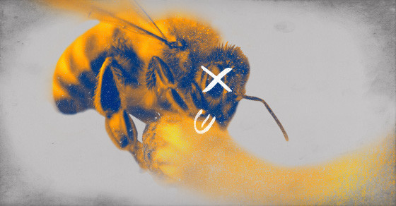 Honeybee Deaths Continue At An Alarming Rate