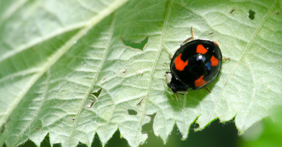 Ladybugs Ain't So Ladylike: A Guide To Their Toxic Color Scheme