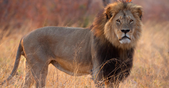 The American Dentist Who Reportedly Killed Cecil The Lion Is Getting Trashed Online