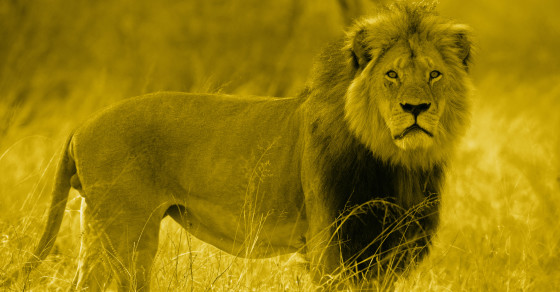 Now Cecil's Brother Will Probably Kill The Cubs