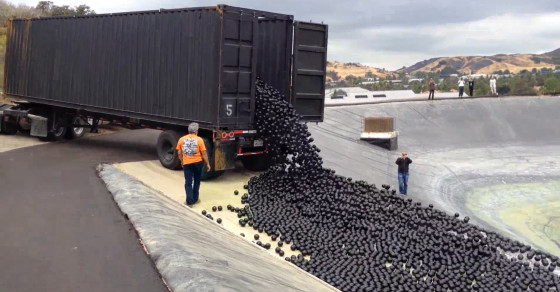 Shade Balls Could Be The Answer To Los Angeles' Water Problems