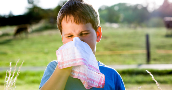 Farm Dust Can (Sort Of) Prevent Allergies