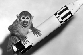 Animal Astronauts: A Brief History Of Dogs, Cats and Monkeys In Space