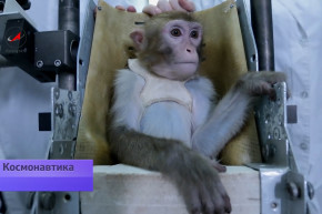 Brief History Of: Primates In Space