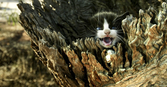 Feral Cats Are Taking Over, And Australia Is Biting Back