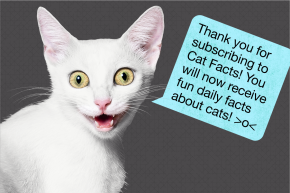 Cat Facts: A Secret History Of The Greatest Text Message Hoax