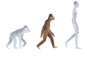 Evolution Google Doodle Angers Creationists, Scientists