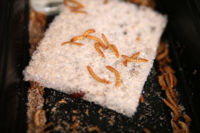 Plastic Eating Worms Take A Bite Out Of Pollution