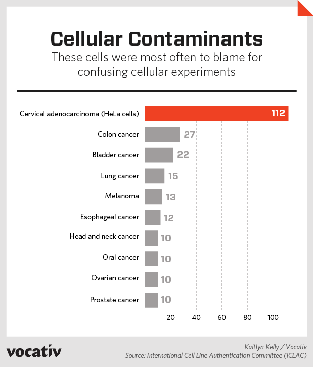 These cells were most often to blame for confusing cellular experiments