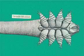 Your Face Is An Orgy Of Tiny Mites, And It's Your Parents' Fault