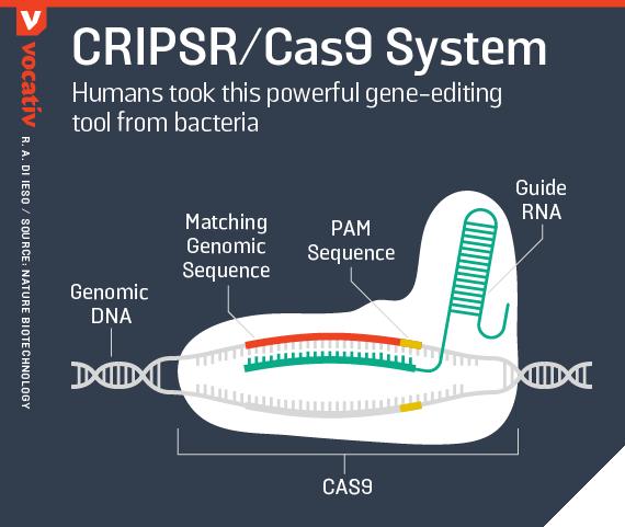 2015_12_28 crispr cas9 mechanism
