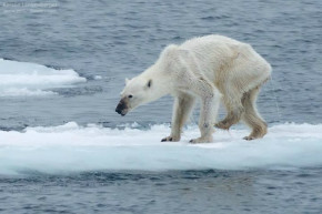 5 Startling Stats To Show Your Favorite Climate-Change Denier